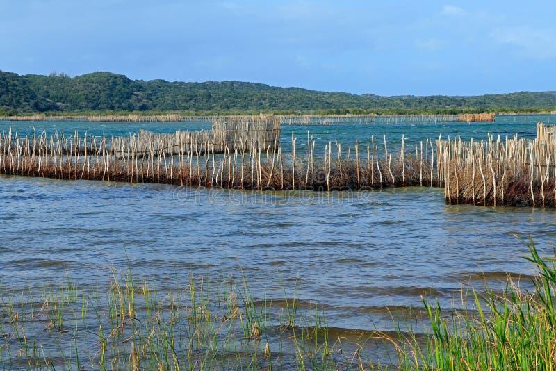 Trampas tradicionales de los pescados - bahía de Kosi fotografía de archivo libre de regalías