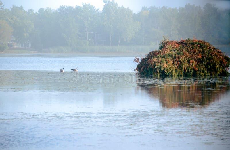 Trampas y persianas del pato en la niebla fotos de archivo libres de regalías