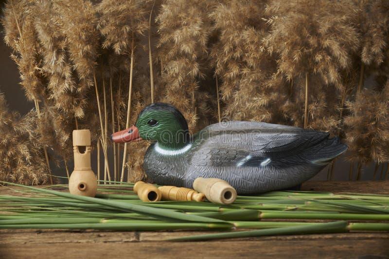 Trampas y silbidos del pato fotos de archivo libres de regalías