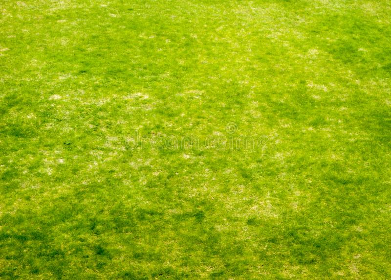 Trampled old lawn with barely sprung up young spring grass. Greenery, lawn, spring, coolnessSONY DSC royalty free stock photo