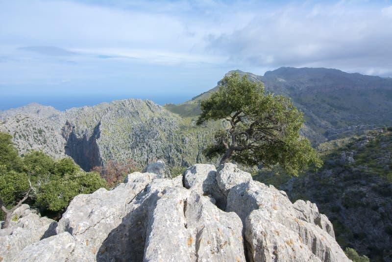 Tramuntana góry Serra De Tramuntana w zachodzie Mallorca, Balearic wyspy, Hiszpania zdjęcie stock