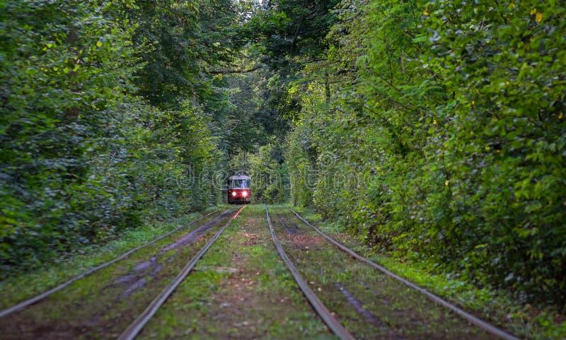 Tramwaj iść przez tunelu w lesie obrazy stock