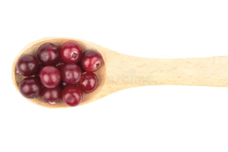 Tranbär i en sked royaltyfri foto