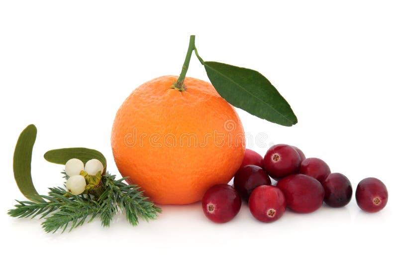 Tranbär och orange frukt arkivfoton