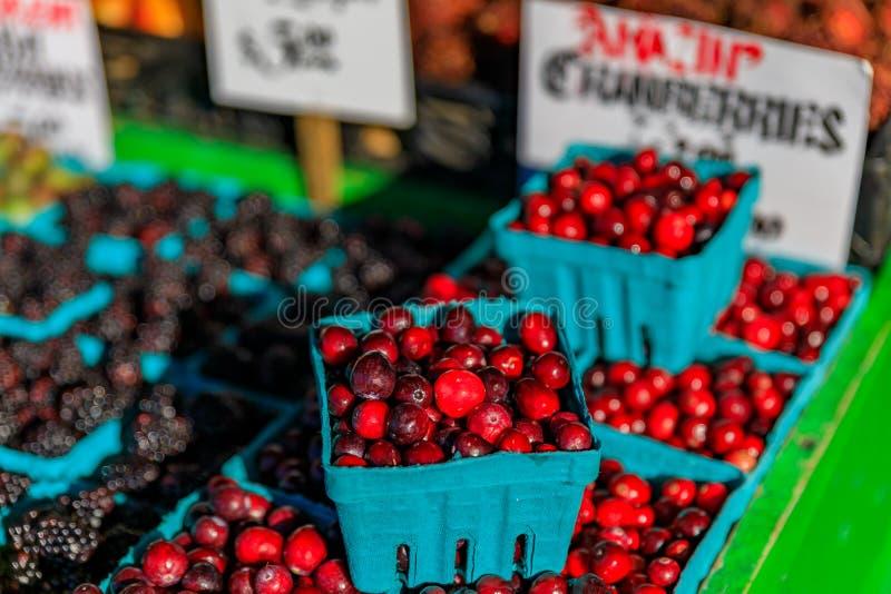 Tranbär som är till salu på, stannar på piken förlägger marknaden i Seattle, Washington arkivbild