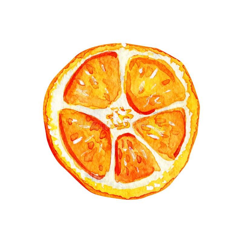Tranche orange d'isolement par aquarelle illustration de vecteur