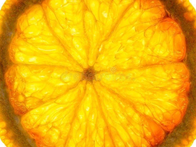 Tranche orange rétro-éclairée image stock