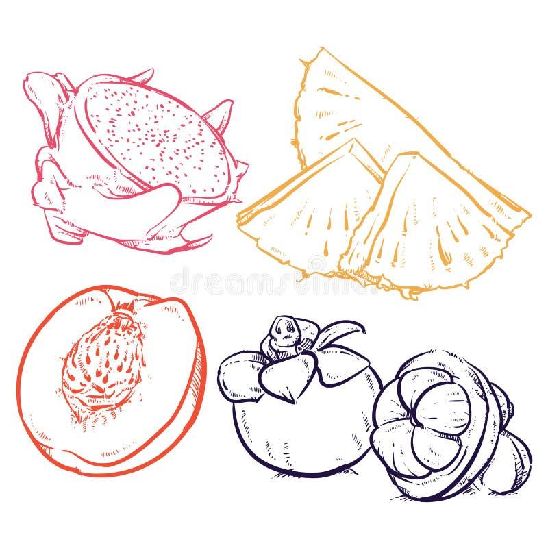 Tranches d'ananas de dessin d'isolement sur le fond blanc Dragon franc photos libres de droits