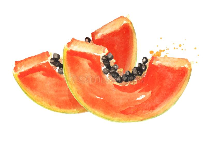 Tranches de fruit mûr doux de papaye Illustration tir?e par la main d'aquarelle, d'isolement sur le fond blanc illustration libre de droits
