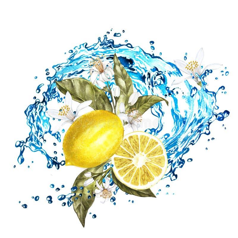 Tranches et fleurs de citron avec l'éclaboussure de l'eau Illustration d'aquarelle sur le fond blanc illustration stock