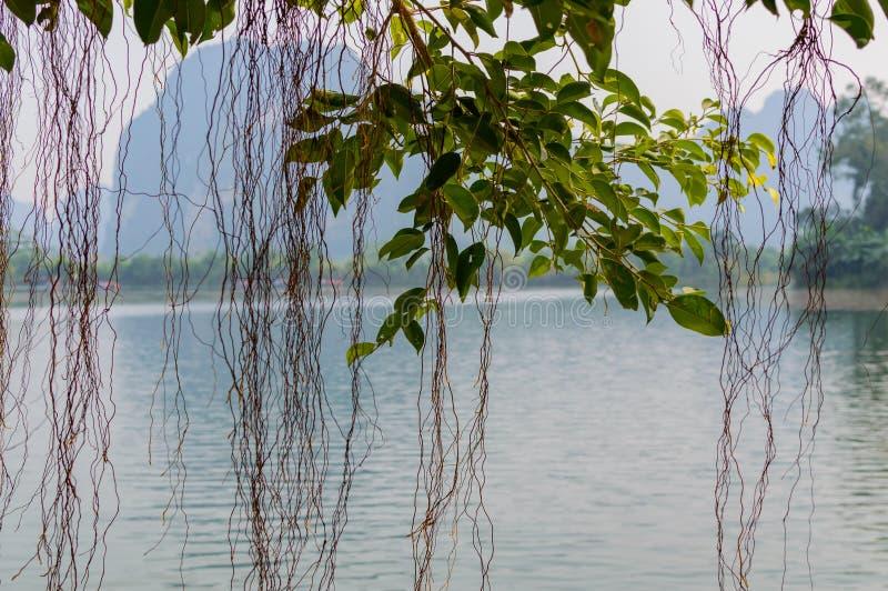 Trang, Tama Coc, Ninh Binh, Wietnam zdjęcia royalty free