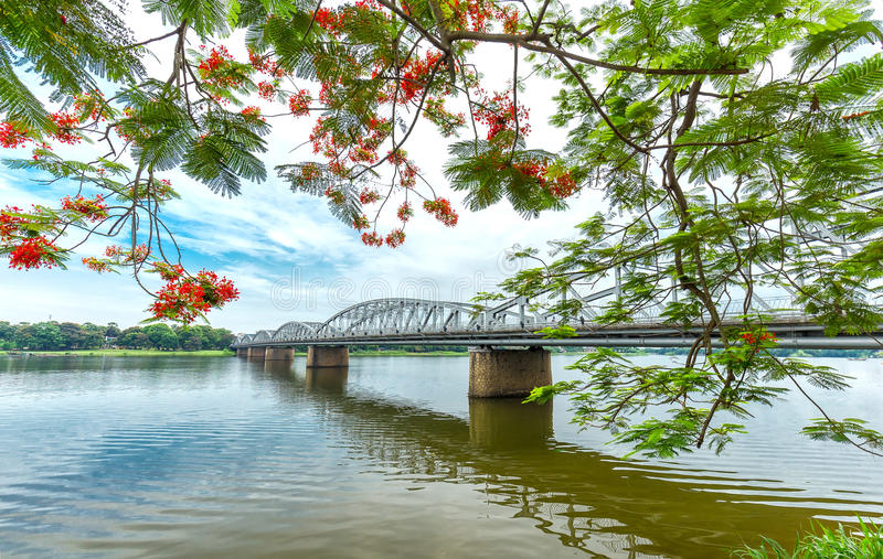 Trang Tien Bridge looming flamboyant side branches reflecting on the river royalty free stock images