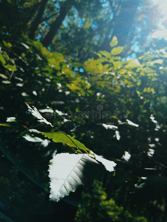 tranquil fotografia stock