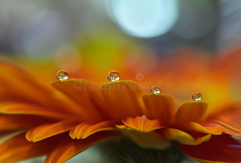 Abstract Macro Photo,water drops.Beautiful Orange Nature Background.Spring,summer,light.Floral Art Design.Wallpaper,pure,plant. royalty free stock images