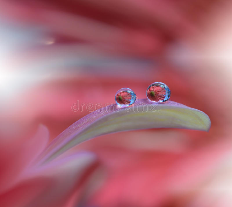 Tranquil abstract closeup art background.Macro photography,water drops.Beautiful Nature.Floral Art.Spring,pink,plant.Amazing.Pure. stock image