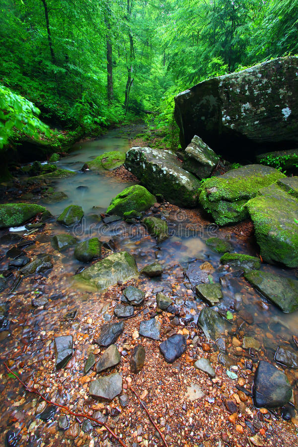 Tranquil Creek Scene in Alabama royalty free stock images