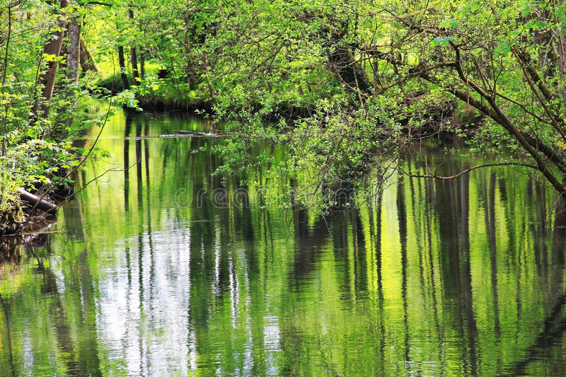 Download Tranquil Creek In The Wilderness, Reflecting Stems In The Water Stock Image - Image: 36677827