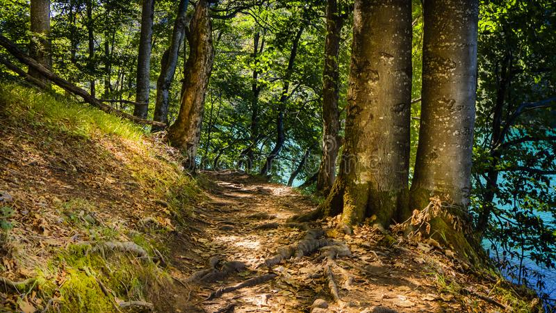 Tranquil Path next to Lake Kozjak through the beautiful Forest of Plitvice National Park royalty free stock photos
