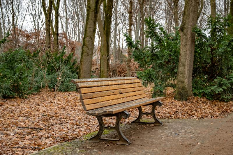 Weathered wood planks bench in Tiergarten park of Berlin Germany. Fall landscape with nobody and empty bench surrounded with trees. Tranquil landscape with royalty free stock images