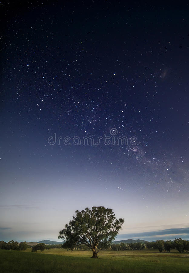 Tranquil lone tree in a field under the Milky Way at night with an atmosphere of tranquility in the mid west of New South Wales royalty free stock photo