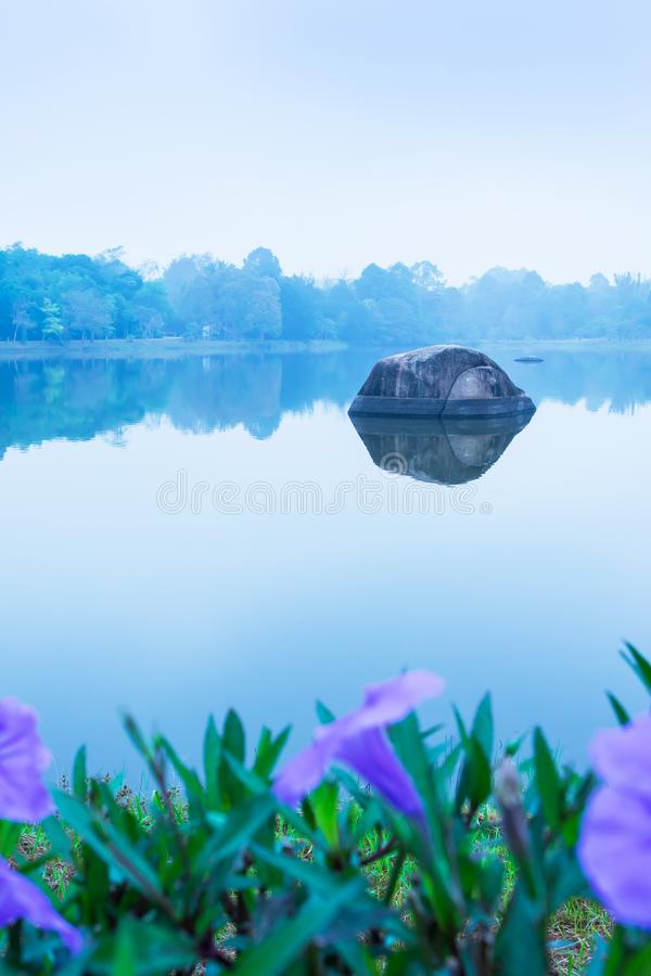 Morning scenery of lake with violet flowers in blue misty, focus on big pebble in calm freshwater royalty free stock image