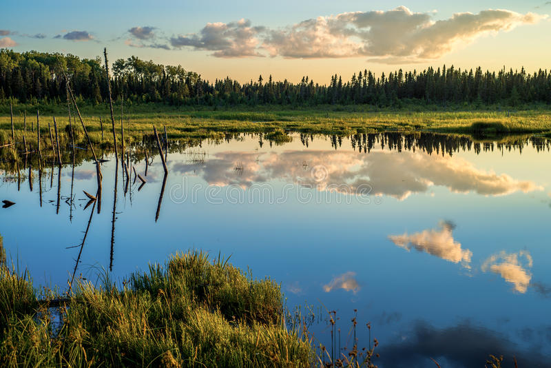 Tranquil pond, boreal forest, sunset royalty free stock photography