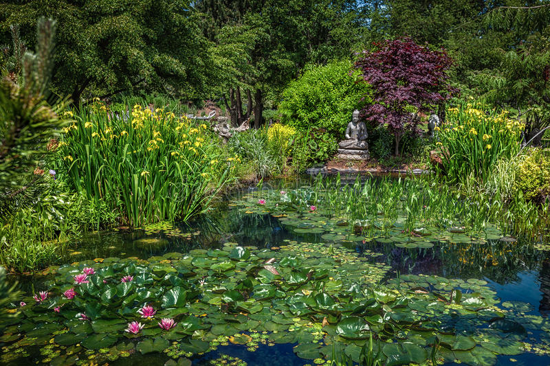 Tranquil Pond stock images