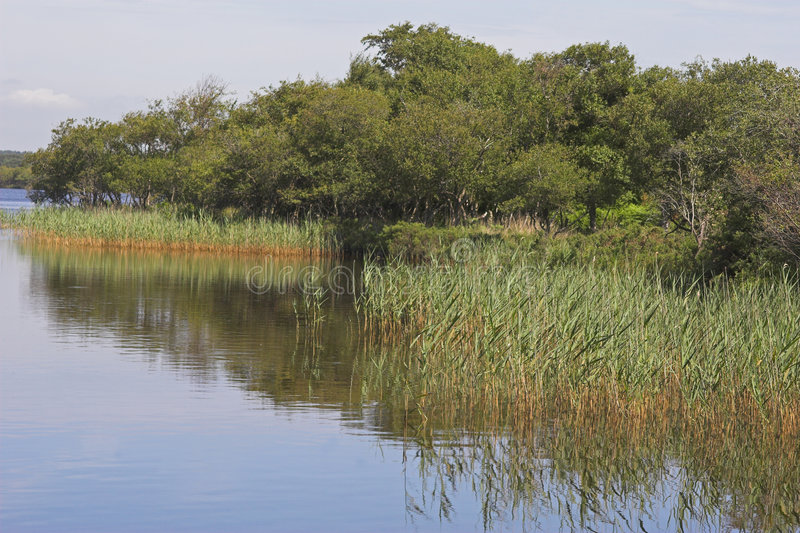 Download Tranquil river scene stock image. Image of water, tree - 1011057