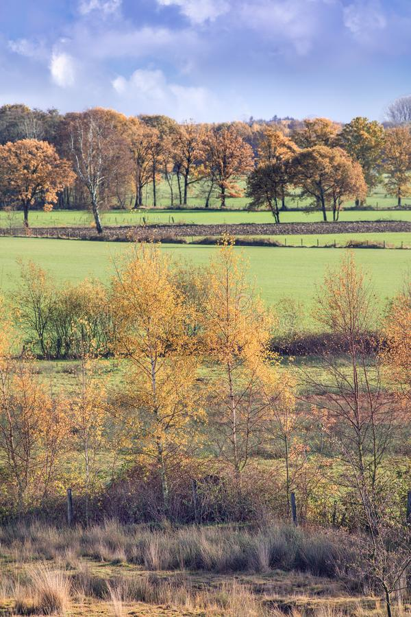 Tranquil rural scenery in autumn colors, Turnhout, Belgium. Tranquil rural scenery with grassland and trees in warm autumn colors, Turnhout, Belgium stock photo