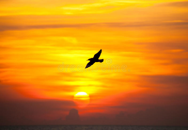 Tranquil scene with seagull flying stock photography