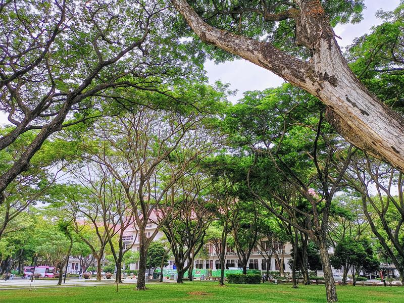 Tranquil Scenery Under Tree Canopy at Chulalongkorn University royalty free stock photos