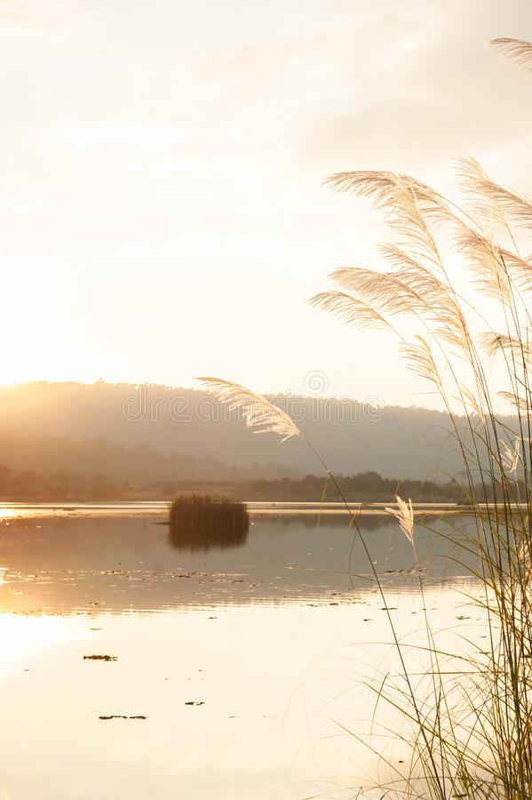 A tranquil sunset lake with reed flowers royalty free stock photography