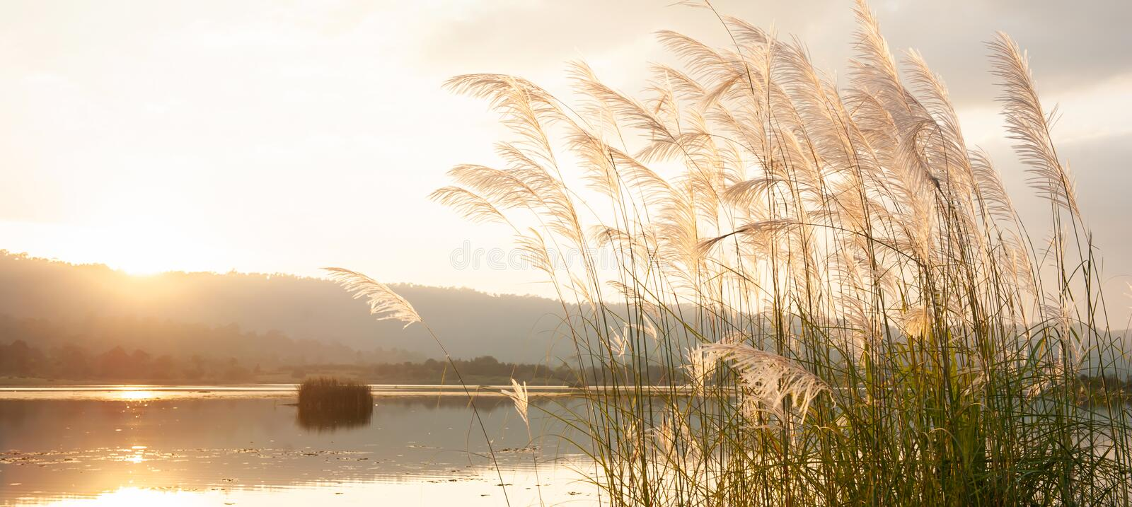 A tranquil sunset lake with reed flowers. Swinging in the wind, glowing sun setting over a mountain range in backgrounds royalty free stock photo