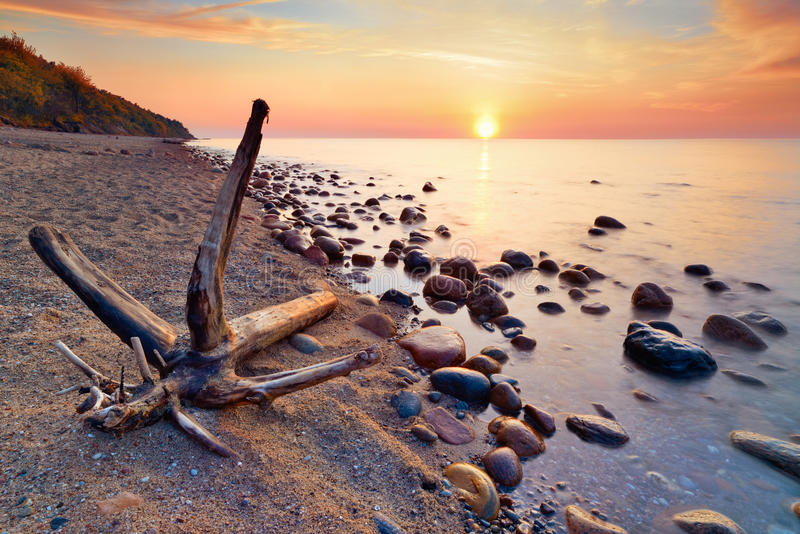Baltic Sea coast tranquil sunshine. Trunk on beach royalty free stock photography