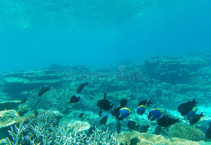 Tranquil underwater royalty free stock image