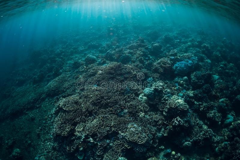 Tranquil underwater scene with copy space. Tropical sea with coral reef royalty free stock photo