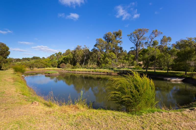Tranquil view of oval pond surrounded by garden, big tree, blue stock image