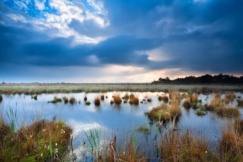 Tranquil weather over swamp royalty free stock images