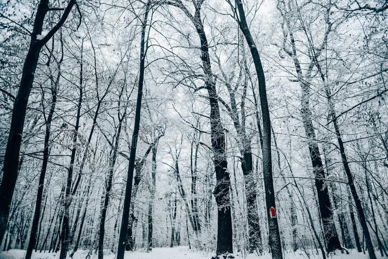 tranquil winter forest under white royalty free stock photos