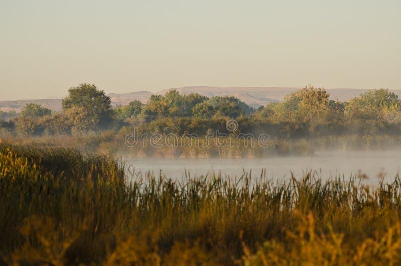 Tranquilidad en Autumn Morning de oro en el pantano fotografía de archivo libre de regalías