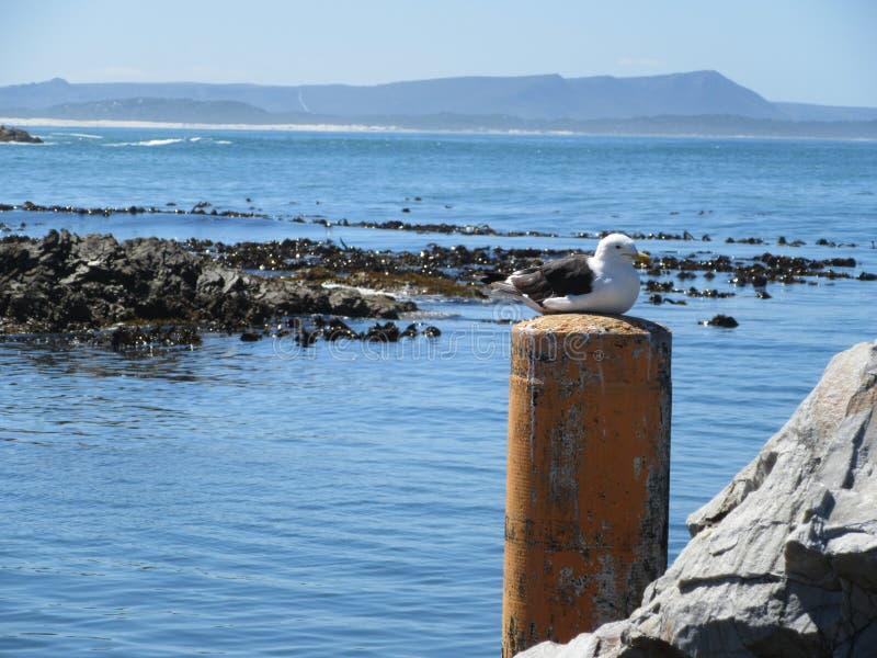 Tranquilidade da gaivota no ponto de perigo imagens de stock royalty free
