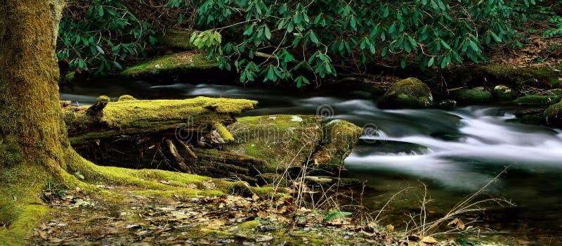 Tranquilidade do córrego da montanha fotografia de stock royalty free