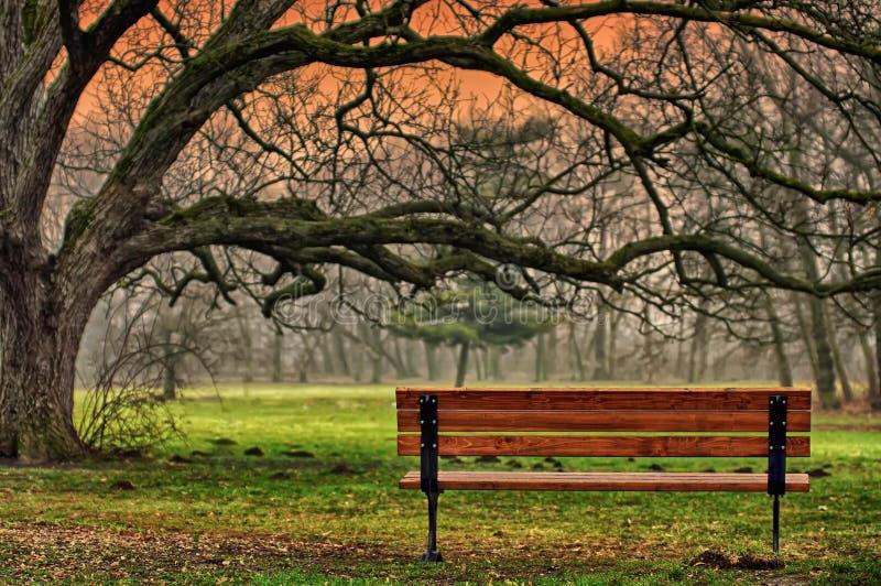 A tranquilidade do parque fotografia de stock