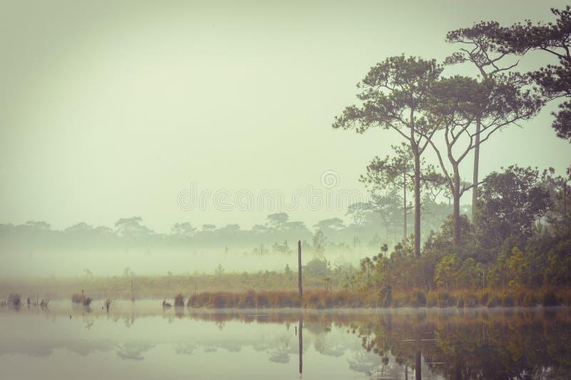 Tranquilidade retro por um lago na manhã. foto de stock