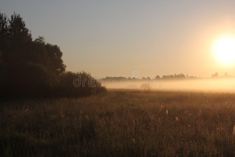 tranquilité majestueuse de nature dans le brouillard de début de la matinée dans un domaine photos libres de droits