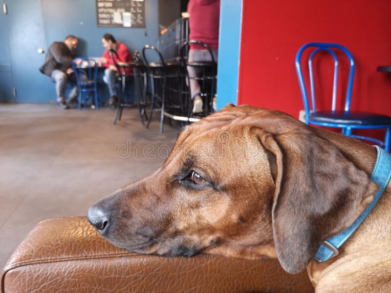 Tranquility / Dogs Friendly Caffe Bar stock photo