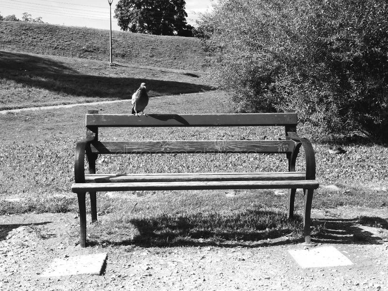 Tranquility. Nature, birds, park, trees, black and white stock photos