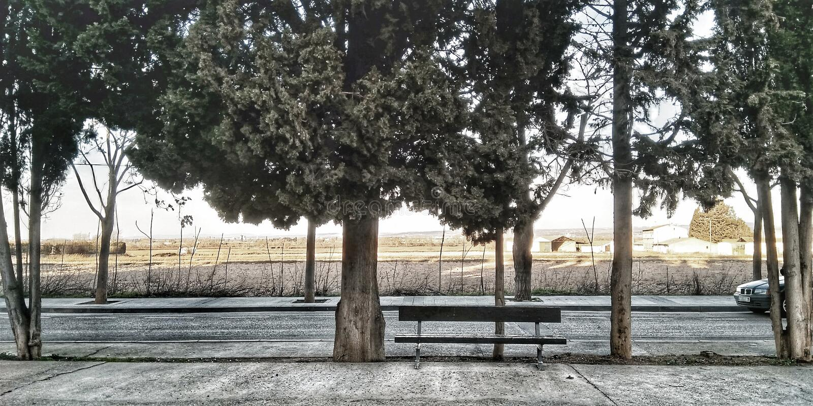 Tranquility. Trees, bench, landscape, nature royalty free stock photography