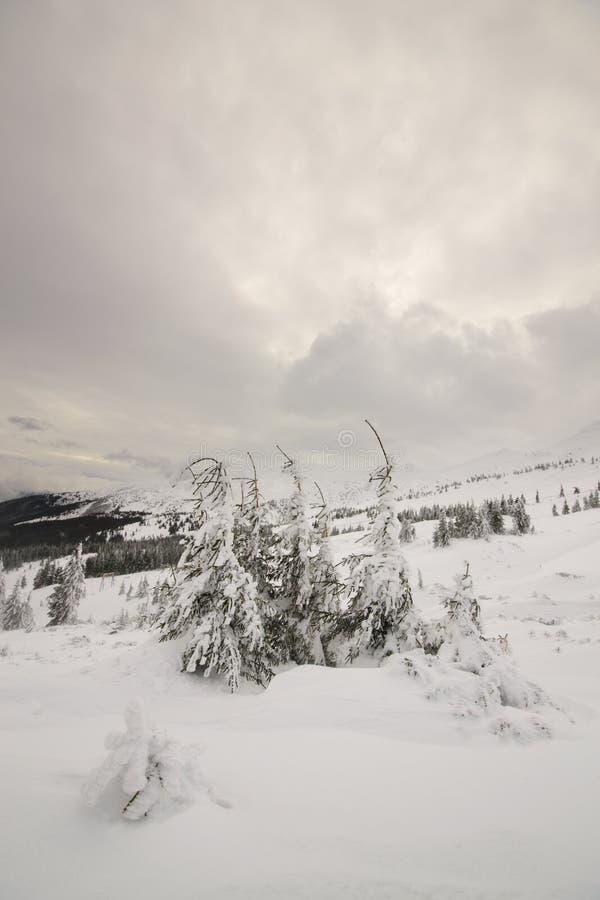 Tranquillity of winter. Carpathian, Ukraine. Fantastic winter landscape. Carpathian, Ukraine. Beauty world royalty free stock image