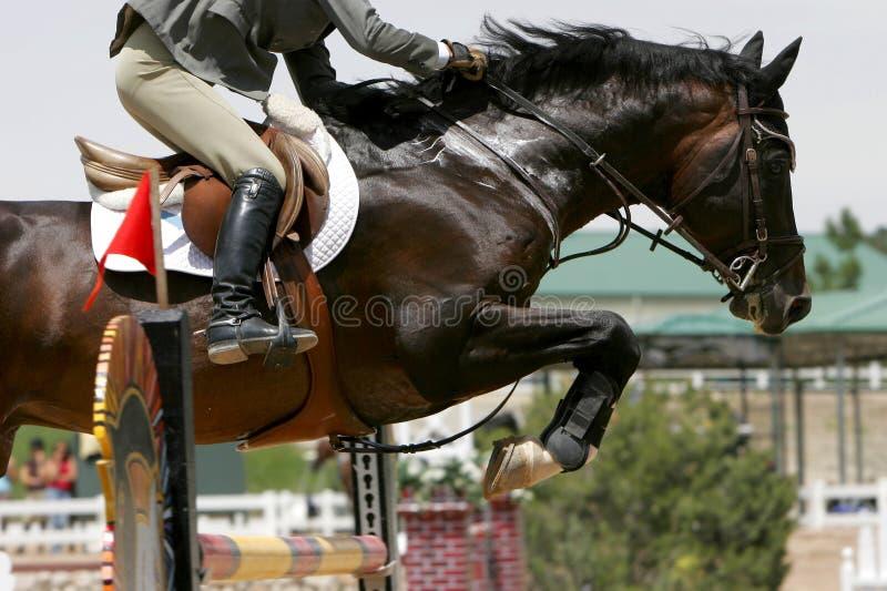 Transenne dell'incrocio - Equestrian immagini stock libere da diritti